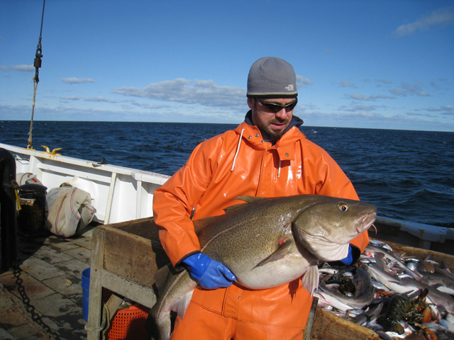 A researcher holds an Atlantic cod.