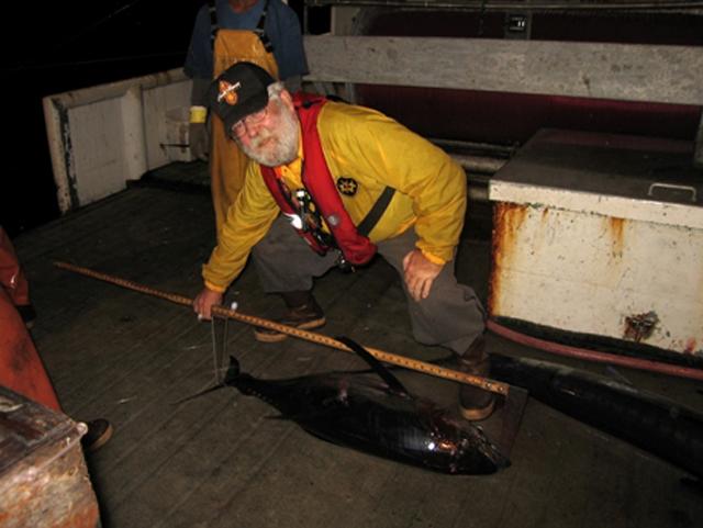 A fishery observer measuring a bigeye tuna.