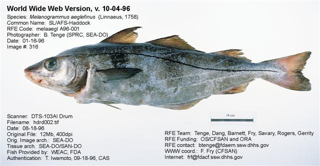 Whole haddock pictured with statistics.