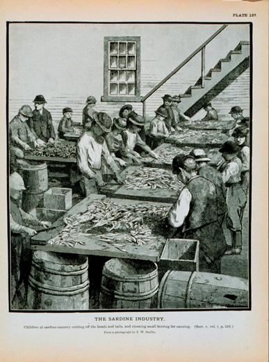 Historic photo of children at sardine cannery cleaning herring for canning photo