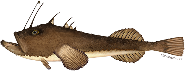 Illustration of a Monkfish