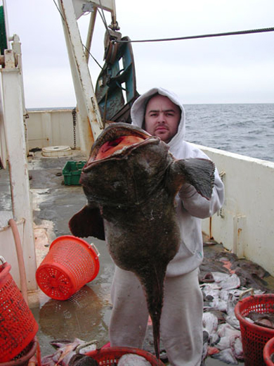 Captain Henri Franco with a large monkfish during a cooperative monkfish survey aboard the F/V Mary K