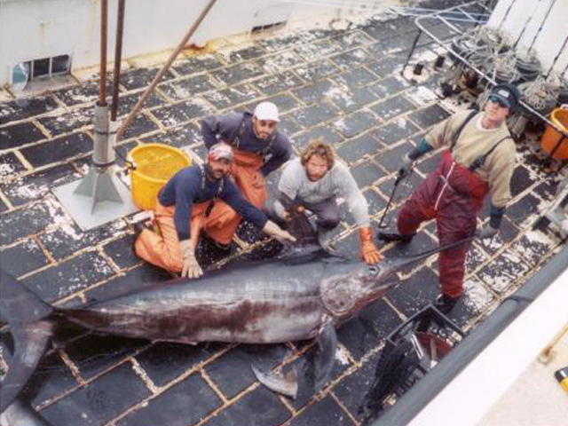 A large swordfish pulled up on a vessel that took part in the experiment on new gear on the Grand Banks from 2001 to 2003 image