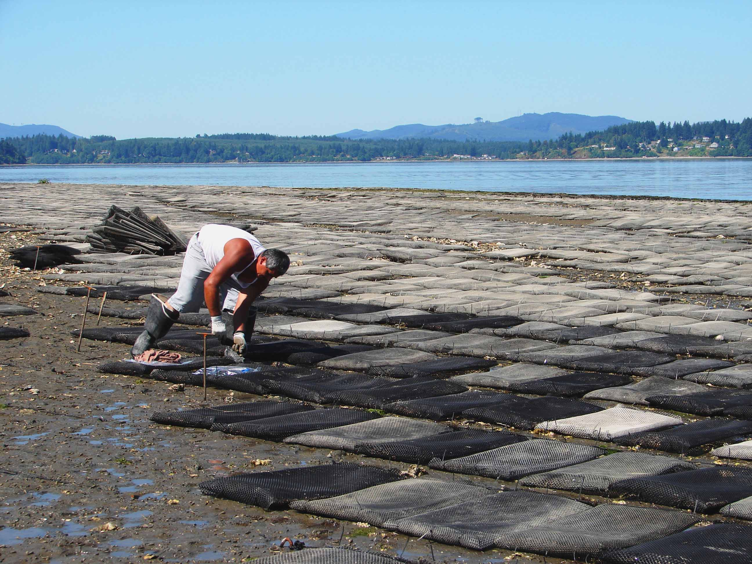 In the Pacific Northwest, the shellfish industry injects an estimated $270 million a year into the region's economy, bringing jobs to over 3,200 people, primarily in coastal communities.