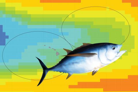 Illustration of a bigeye tuna over a map of the ocean temperatures around Hawaii