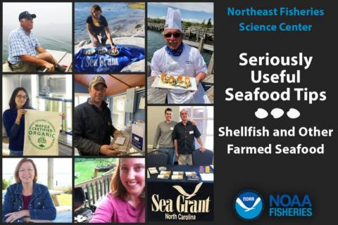 Collage of photos of fish farmers, distributors, and retailers.