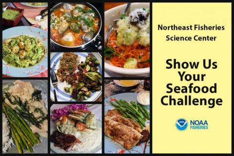Collage of seafood dishes submitted by staff of the Northeast Fisheries Science Center.