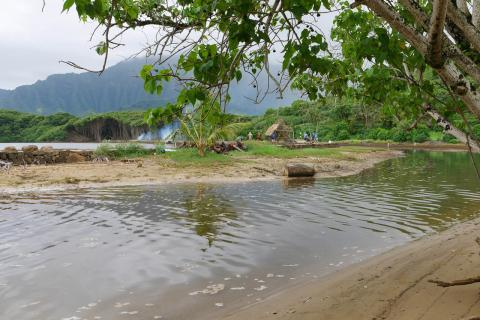 Hatchery raised mullet transferred into He`eia Fishpond.
