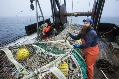 Fishermen aboard Miss Sue, of Newport, Oregon, haul in their catch of rockfish off the West Coast. Rockfish represent some of the most common groundfish off the West Coast, and several species have been rebuilt in recent years. Credit: John Rae.