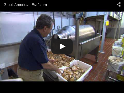 The Great American Surfclam