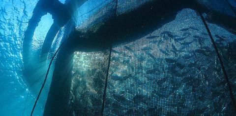 Offshore aquaculture image