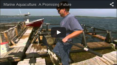 Marine Aquaculture: A Promising Future